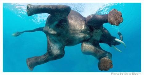 Elefanten-1