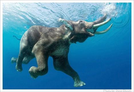 Elefanten-2