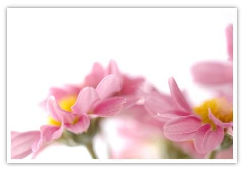 01-Blume-Dancing-Petals