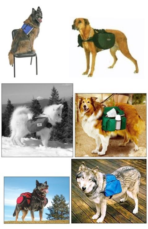 Dogsaddle