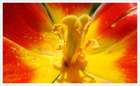 Fruehlingsblume