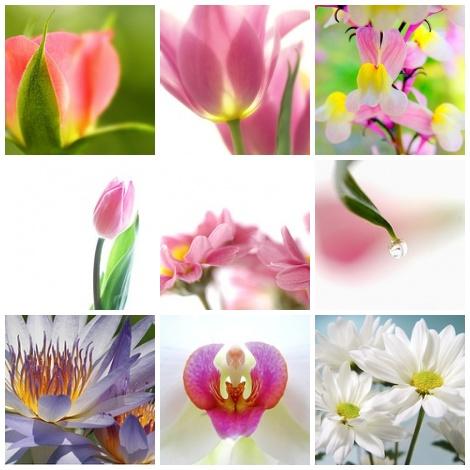Blumenmosaic